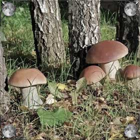 Видеть грибы