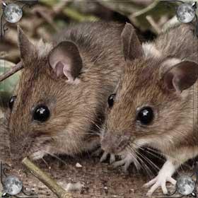 Видеть мышей