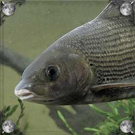 Видеть рыбу