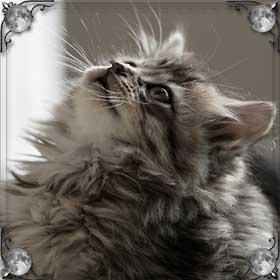 Выгнать кошек