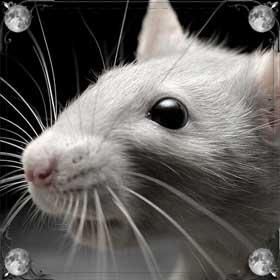 Выгнать крысу