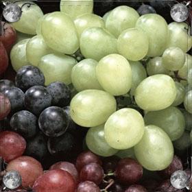 Виноградник с виноградом