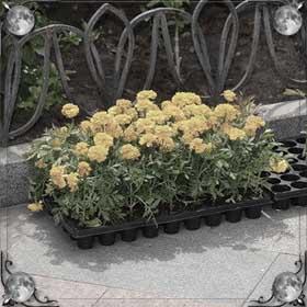 Вырывать цветы