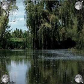 Высохший пруд