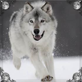 Вой волков