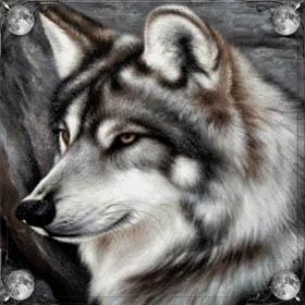 Волки и волчата