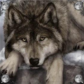Волк кусает