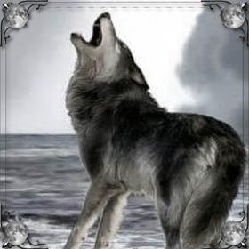 Волк защищает