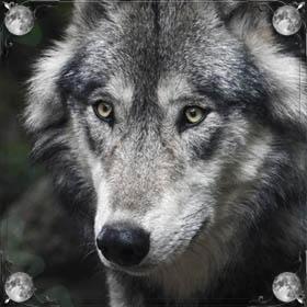 Волки напали