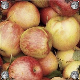 Воровать яблоки