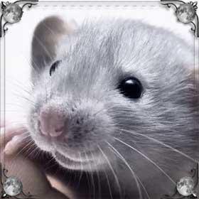 Задушить крысу