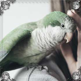 Залетел попугай