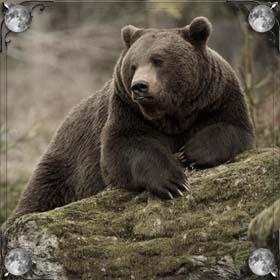 Защитил медведь