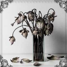 Завяли цветы