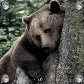 Злой медведь