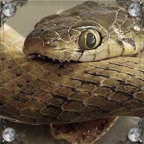 Змея укусила ребенка