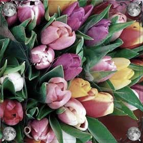 Золотые тюльпаны