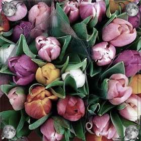Золотистые тюльпаны